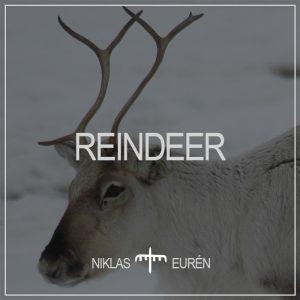 Reindeer Sound Library